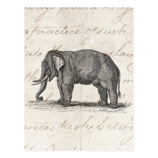 Vintage 1800s Elephant Illustration - Elephants Postcard