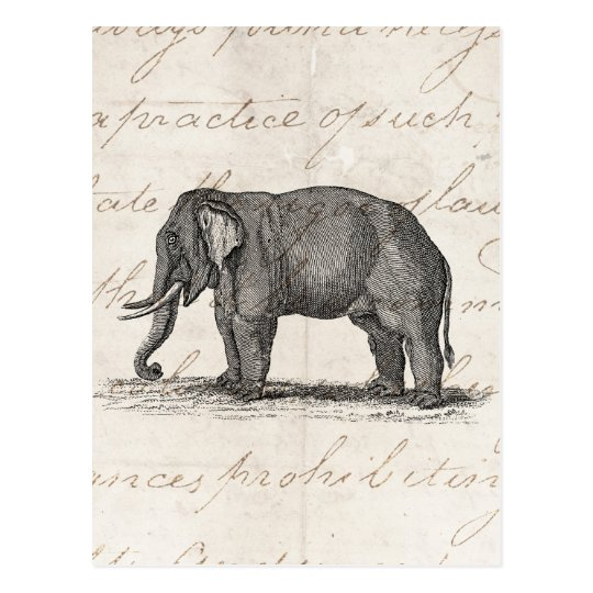 Vintage 1800s Elephant Illustration - Elephants Stationery ... Vintage Elephant Illustration