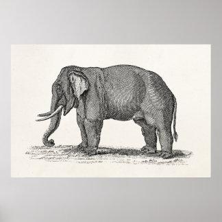Vintage 1800s Elephant Illustration - Elephants Print