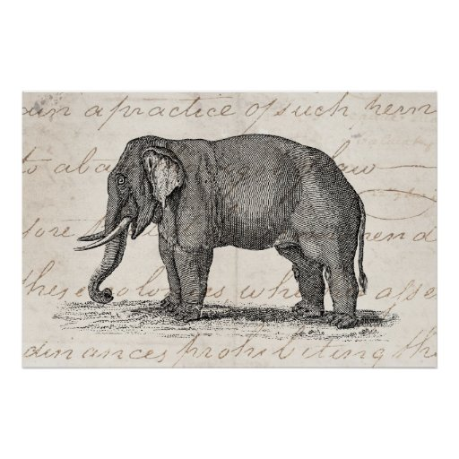 Vintage 1800s Elephant Illustration - Elephants PrintVintage Elephant Illustration