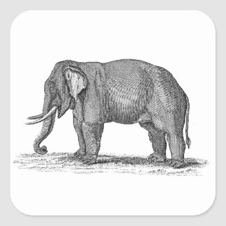 Vintage 1800s Elephant Illustration - Elephants Square Sticker