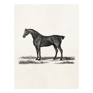 Vintage 1800s English Hunter Horse Hunting Horses Postcard
