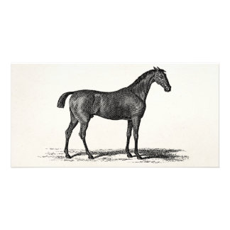Vintage 1800s English Race Horse - Racing Horses Card