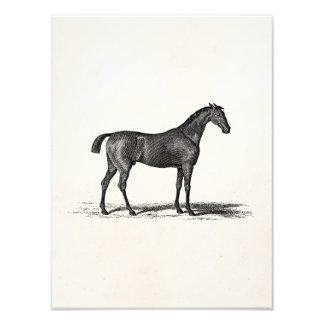 Vintage 1800s English Race Horse - Racing Horses Photo Print