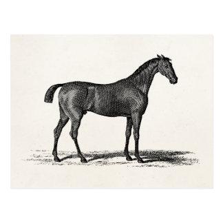 Vintage 1800s English Race Horse - Racing Horses Postcard