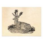 Vintage 1800s Fallow Deer Illustration Template Photo Print