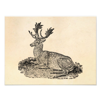 Vintage 1800s Fallow Deer Illustration Template Photo Print