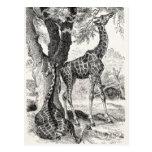 Vintage 1800s Giraffes African Giraffe Template Postcard