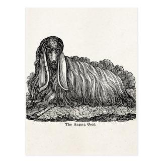 Vintage 1800s Goats Illustration Angora Goat Postcards