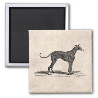 Vintage 1800s Greyhound Dog Illustration - Dogs 2 Inch Square Magnet