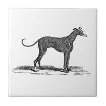 Vintage 1800s Greyhound Dog Illustration - Dogs Ceramic Tile