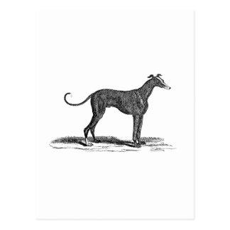 Vintage 1800s Greyhound Dog Illustration - Dogs Postcard