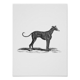 Vintage 1800s Greyhound Dog Illustration - Dogs Posters