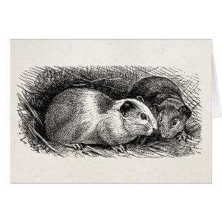 Vintage 1800s Guinea Pig Illustration Retro Cavies Card