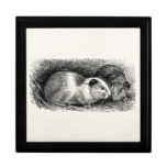 Vintage 1800s Guinea Pig Illustration Retro Cavies Gift Boxes