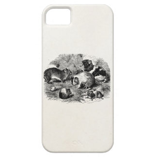Vintage 1800s Guinea Pig Retro Old Guinea Pigs iPhone 5 Cover