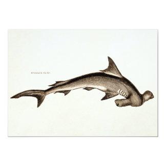 Vintage 1800s Hammerhead Shark Old Hammer Head Card