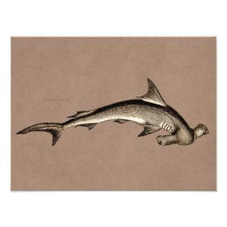 Vintage 1800s Hammerhead Shark Old Hammer Head Photo Print