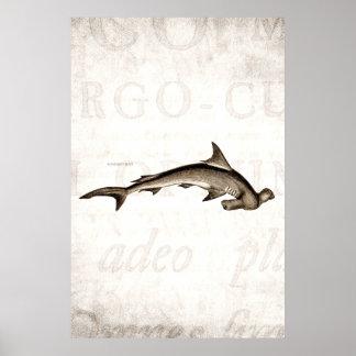 Vintage 1800s Hammerhead Shark Old Hammer Head Poster