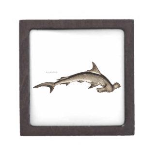 Vintage 1800s Hammerhead Shark Old Hammer Head Premium Trinket Boxes