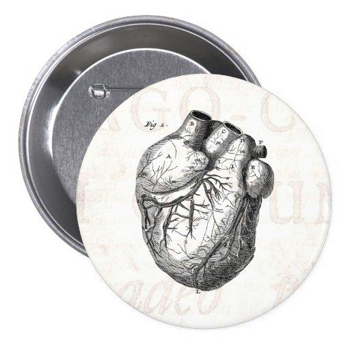 Vintage 1800s Heart Retro Cardiac Anatomy Hearts 3 Inch Round Button