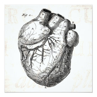 Vintage 1800s Heart Retro Cardiac Anatomy Hearts Card