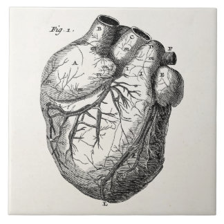 Vintage 1800s Heart Retro Cardiac Anatomy Hearts Ceramic Tile