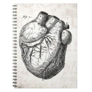 Vintage 1800s Heart Retro Cardiac Anatomy Hearts Notebook