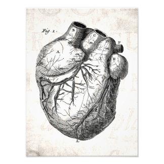 Vintage 1800s Heart Retro Cardiac Anatomy Hearts Photo Print