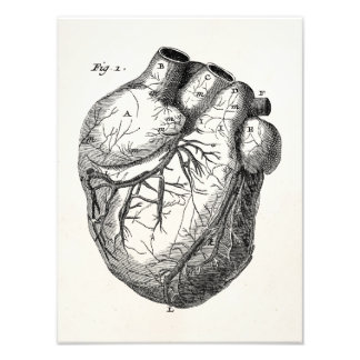 Vintage 1800s Heart Retro Cardiac Anatomy Hearts Photo Print