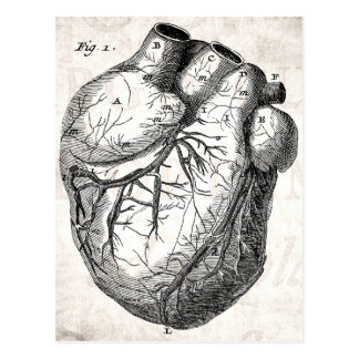 Vintage 1800s Heart Retro Cardiac Anatomy Hearts Postcard