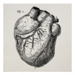 Vintage 1800s Heart Retro Cardiac Anatomy Hearts Poster