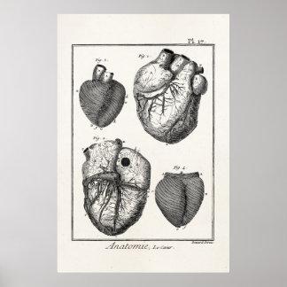 Vintage 1800s Heart Retro Cardiac Anatomy Hearts Poster
