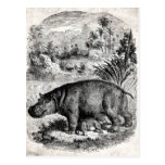 Vintage 1800s Hippo w Baby Retro Hippos Template Postcards