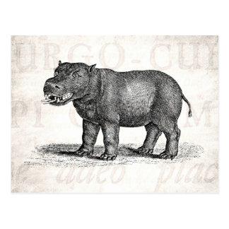Vintage 1800s Hippopotamus Illustration - Hippos Postcard