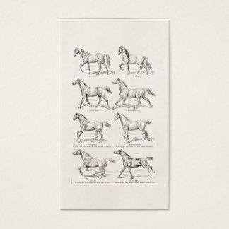 Vintage 1800s Horse Gaits Illustration Horses Business Card