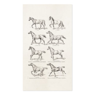 Vintage 1800s Horse Gaits Illustration Horses Business Card Template