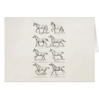 Vintage 1800s Horse Gaits Illustration Horses Card