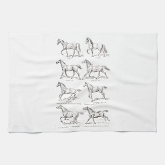 Vintage 1800s Horse Gaits Illustration Horses Kitchen Towels