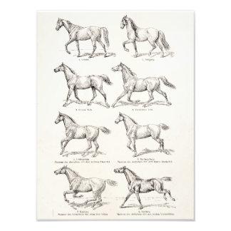 Vintage 1800s Horse Gaits Illustration Horses Photo Print