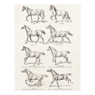 Vintage 1800s Horse Gaits Illustration Horses Postcard