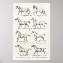 Vintage 1800s Horse Gaits Illustration Horses Poster