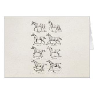Vintage 1800s Horse Gaits Illustration Horses Stationery Note Card