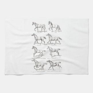 Vintage 1800s Horse Gaits Illustration Horses Towel