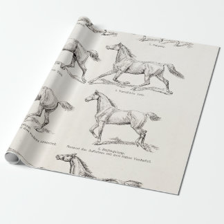 Vintage 1800s Horse Gaits Illustration Horses Wrapping Paper
