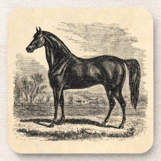 Vintage 1800s Horse - Morgan Equestrian Template Beverage Coaster