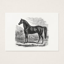 Vintage 1800s Horse - Morgan Equestrian Template Business Card