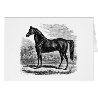 Vintage 1800s Horse - Morgan Equestrian Template Stationery Note Card