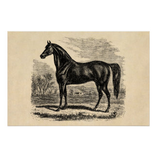 Vintage 1800s Horse - Morgan Equestrian Template Posters