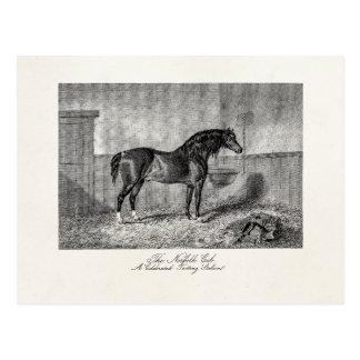 Vintage 1800s Horse Norfolk Cob Hackney Retro Postcard